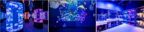 全港首個海洋探索體驗館 現已登陸荃灣 Plaza 88
